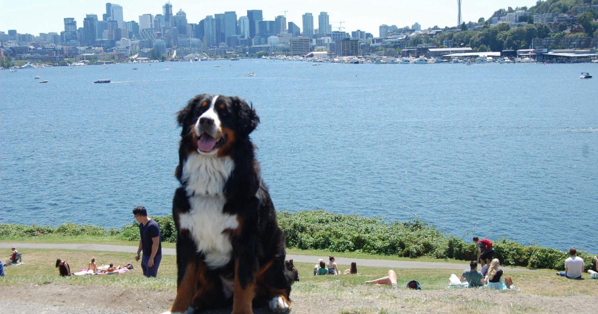 Find Dog Walkers In Crown Hill Neighborhood Seattle Wa